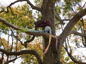 クスノキのおしゃれ並木