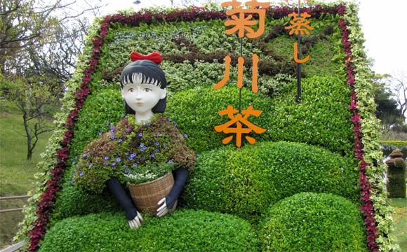 お茶の菊川