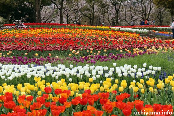 国営木曽三川公園のチューリップ