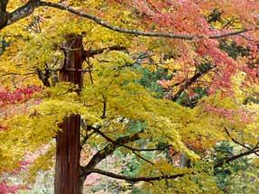 稲武の紅葉樹林