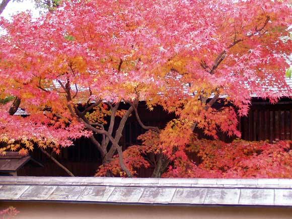 松柏美術館の紅葉