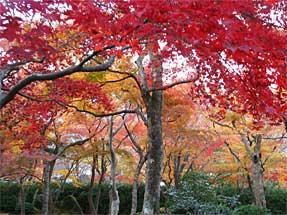 箱根美術館・庭園