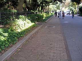 上野公園・木材園路舗装