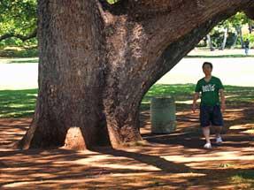 この木なんの木 気になる木