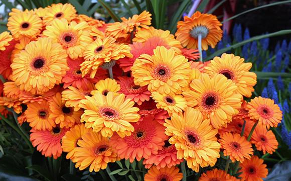 グランビガール城の温室の花