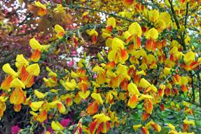 アッパーハウスの花