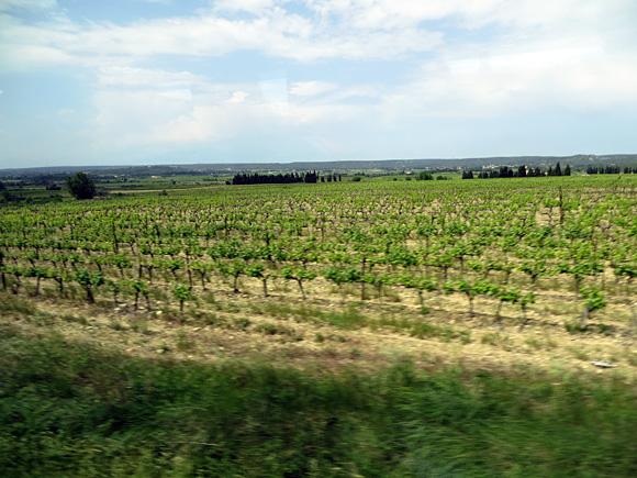 ポン・デュ・ガールへの道風景