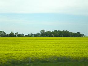 ブロワへの道風景