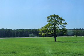 ラトビア(スィグルダ)〜エストニアの道風景