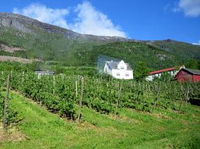 ハダンゲルフィヨルドへの道風景