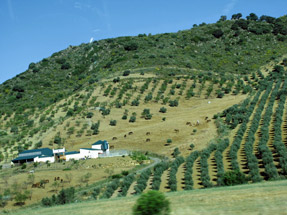 ミハスへの道風景