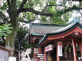 六角通・武信稲荷神社のエノキ
