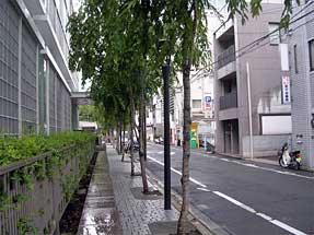 富小路通・地裁から弁護士会館に続く並木道
