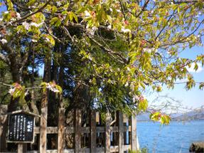 田沢湖・七種木