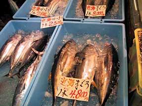 焼津魚センター