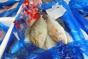 魚屋・魚富士