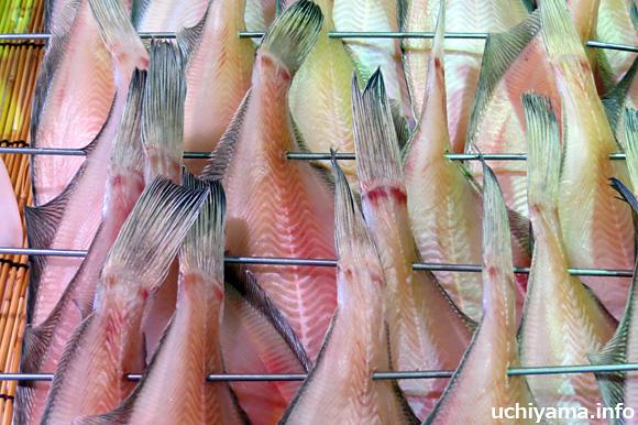 若狭の魚介
