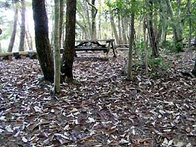 山道の落ち葉