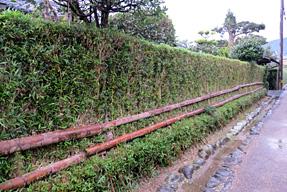 土居廓中・土用竹の生垣