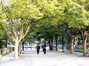 中央公会堂前の通り