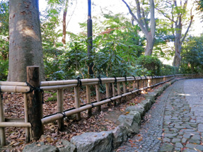 浜松城公園の垣根・金閣寺