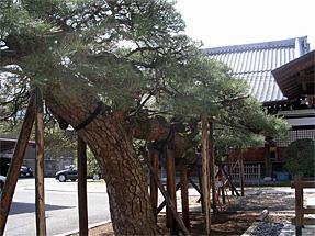 称念寺(猫寺)