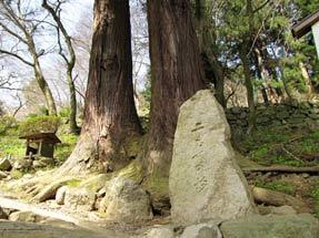 謡曲「玉鬘」と二本の杉