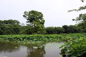 鶴岡八幡宮・源氏池