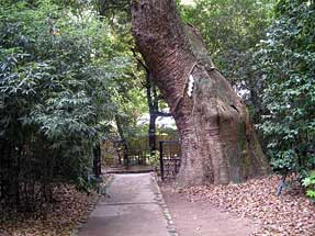 生田神社・生田の森