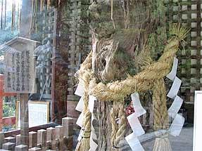 下り松の古木