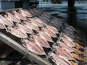 魚の干物作り・アジ