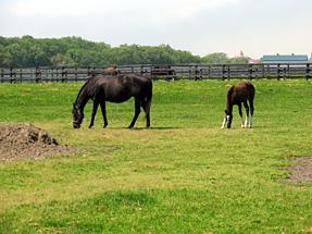 サラブレット銀座 軽種馬生産