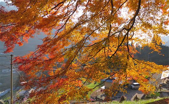 三所神社の秋