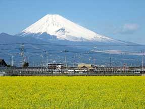 伊豆の国・富士と菜の花