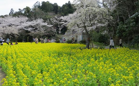 フラワ−パ−クの春