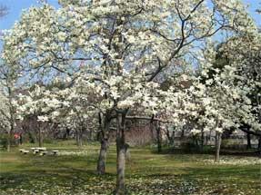 北の丸公園の春