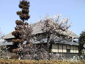 梅越しの家