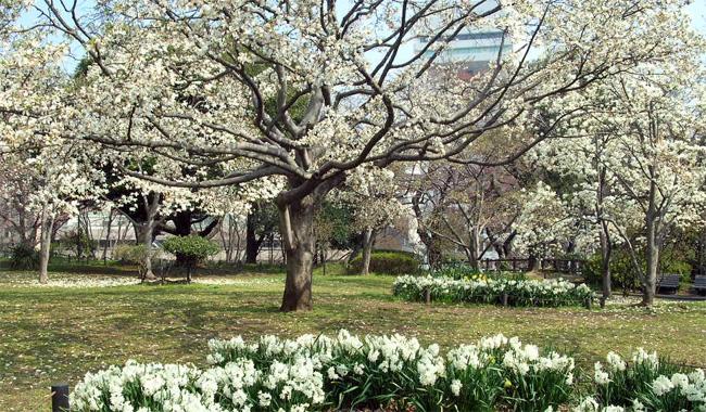 京都・哲学の道