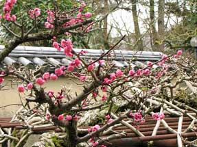 唐招提寺の春