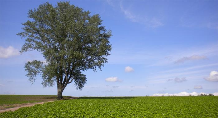 北海道・哲学の木