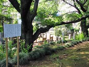 長池跡(谷戸川源流)