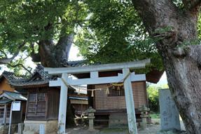 赤坂宿・関川神社楠