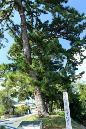 御油宿の松並木