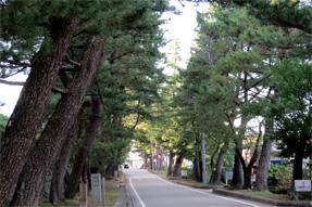 藤川宿・松並木