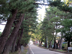 藤川宿の松並木