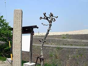遠景ー木曽川堤防
