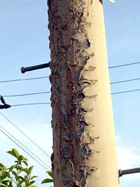 焼け残った電柱