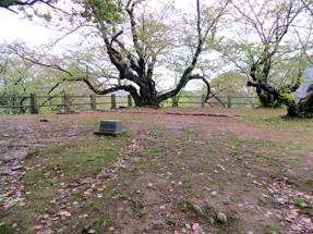 福岡城・御時櫓跡