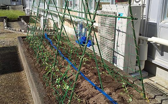 野菜栽培・活動支援